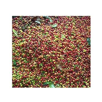 Vietnam robusta roasted coffee beans - Green Coffee Export to EU, USA, Korea, Japan, UAE - Roasted Coffee at Cheap Price