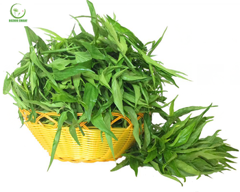 Organic Sabah snake grass from Clinacanthus nutans,magic herb