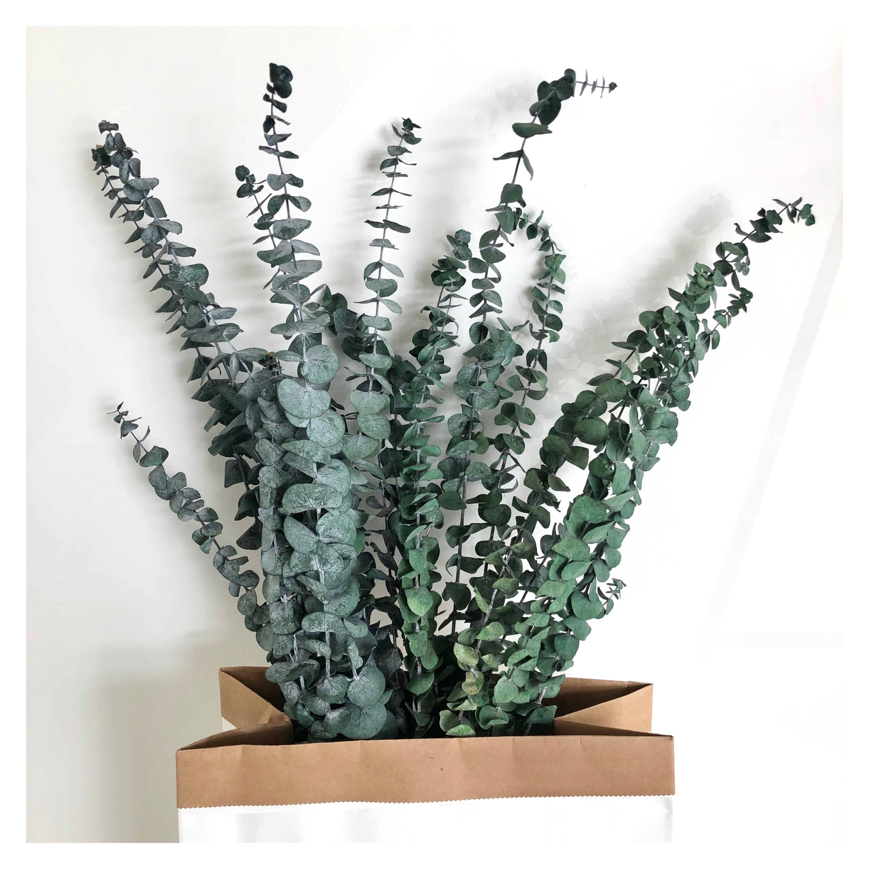 2021 New Hot Sale Dried Eucalyptus Leaves For Wedding Decoration - Buy  Eucalyptus Leaves,Dried Eucalyptus Leaves,Preserved Frosted Natural  Eucalyptus Leaves Branch Product on Alibaba.com