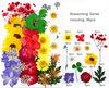 colorful 36pcs