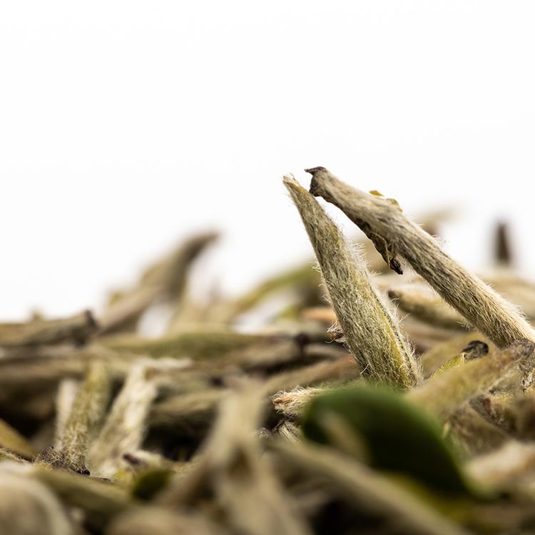 Top quality organic aged white tea silver tip pekoe silver needle white tea - 4uTea | 4uTea.com