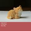Little Cat-35