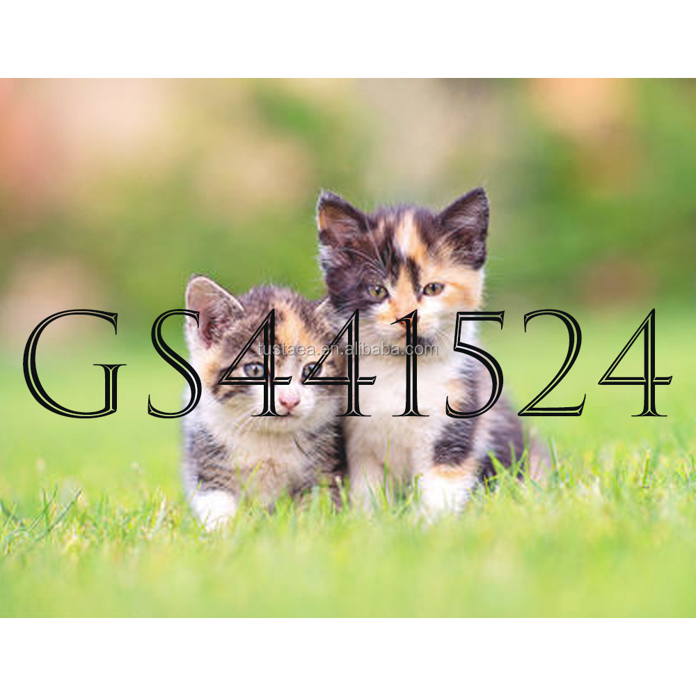High quality FIPV gs441524