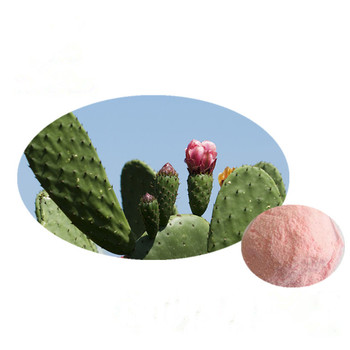 Natural Cactus Dried Prickly Pear Fruit Powder Prickly Pear Fruit Red Powder / Cactus Fruit Powder