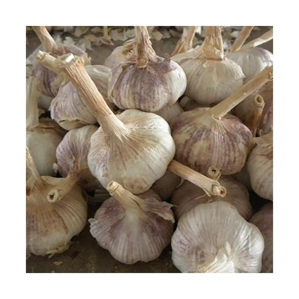 Made China Superior Quality Organic Healthy Normal Extra Super White Garlic