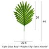 Latex Light Green