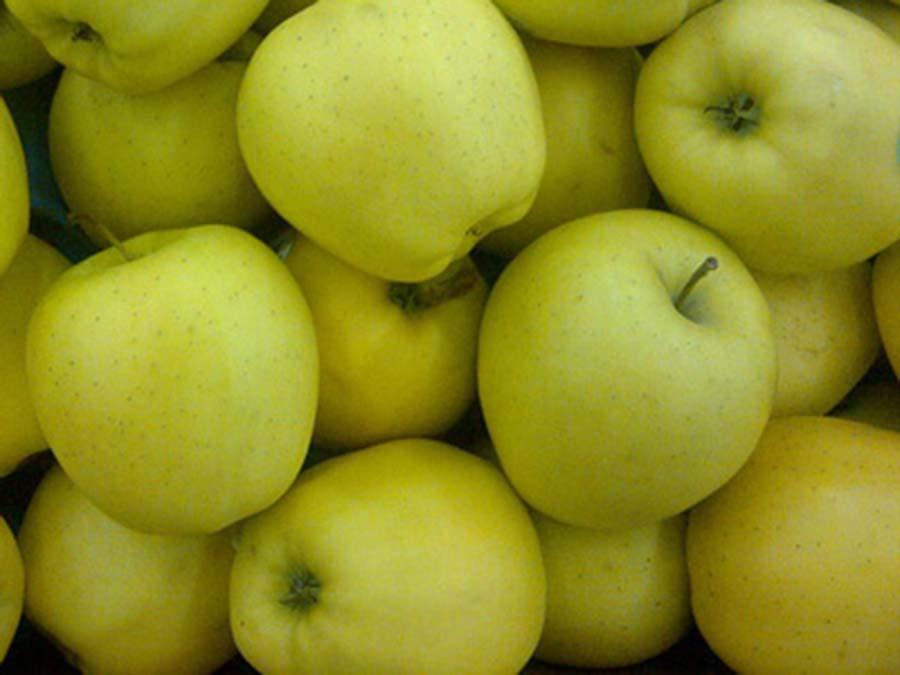 Высокое качество экспорта высокого качества Премиум сочный и сладкий Голден Делишес Apple