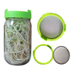 Green glass sprouting jar