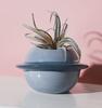planet flower pot3