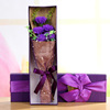 5 carnations Purple