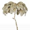 Khaki Feather