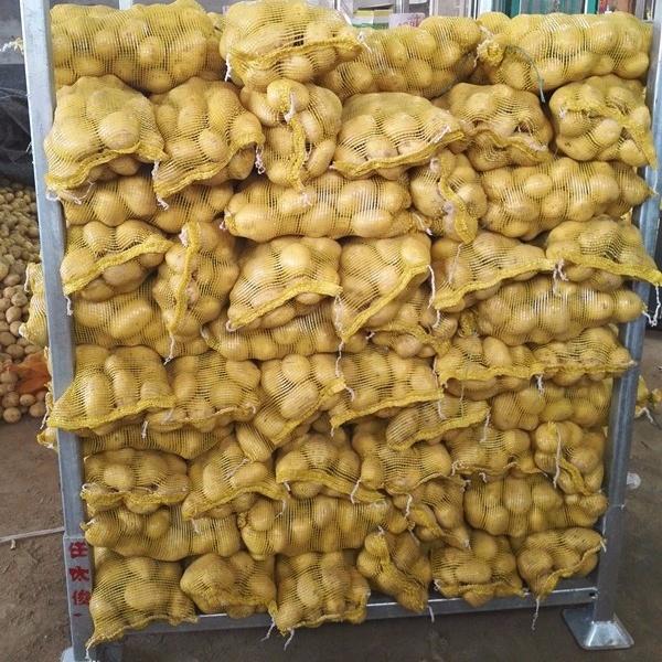 New crop fresh sweet potato wholesale price