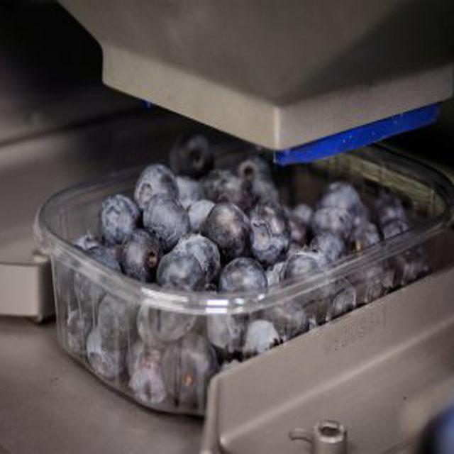 Blueberry2.jpg