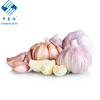 /product-detail/new-crop-2020-delicious-fresh-garlic-white-peeled-super-garlic-62462770036.html
