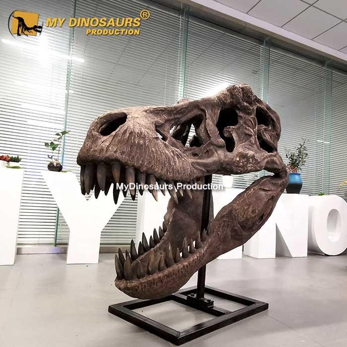 MY Dino-M13-9 Dinosaur Museum Quality Artificial Animal Skull