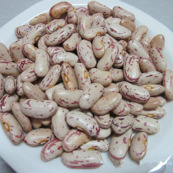 Light Speckled Kidney Beans dried broad & fava Navy beans Natural Organic Dried Ormosia Small Red bean