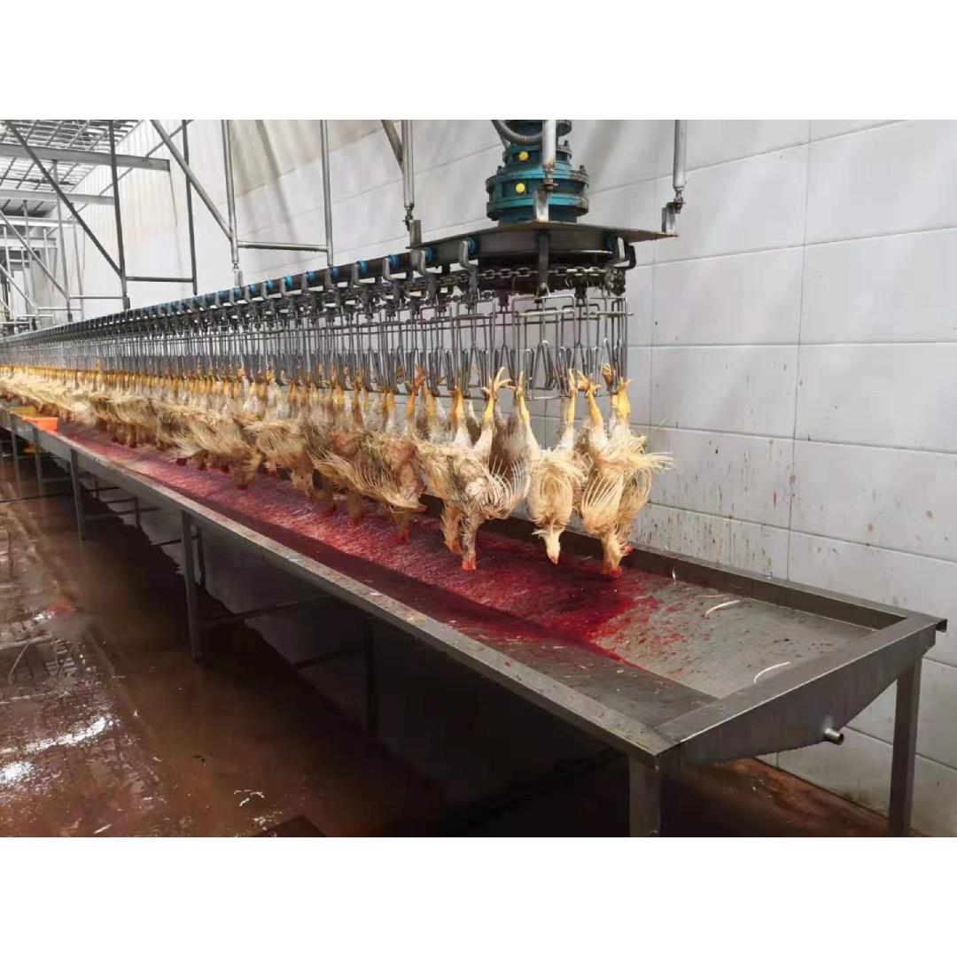 Конвейер убоя курицы транспортер interroll