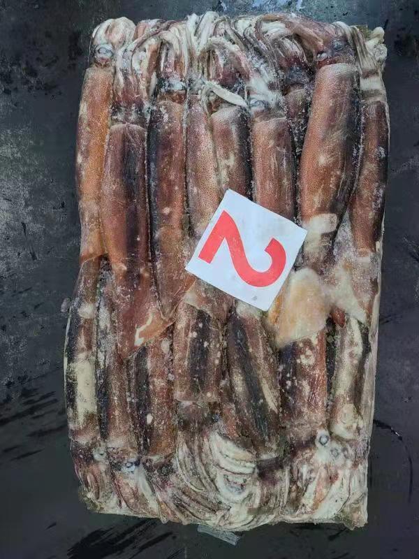 Argentina Illex Squid 300/400g Wholesale Frozen Argentina Squid