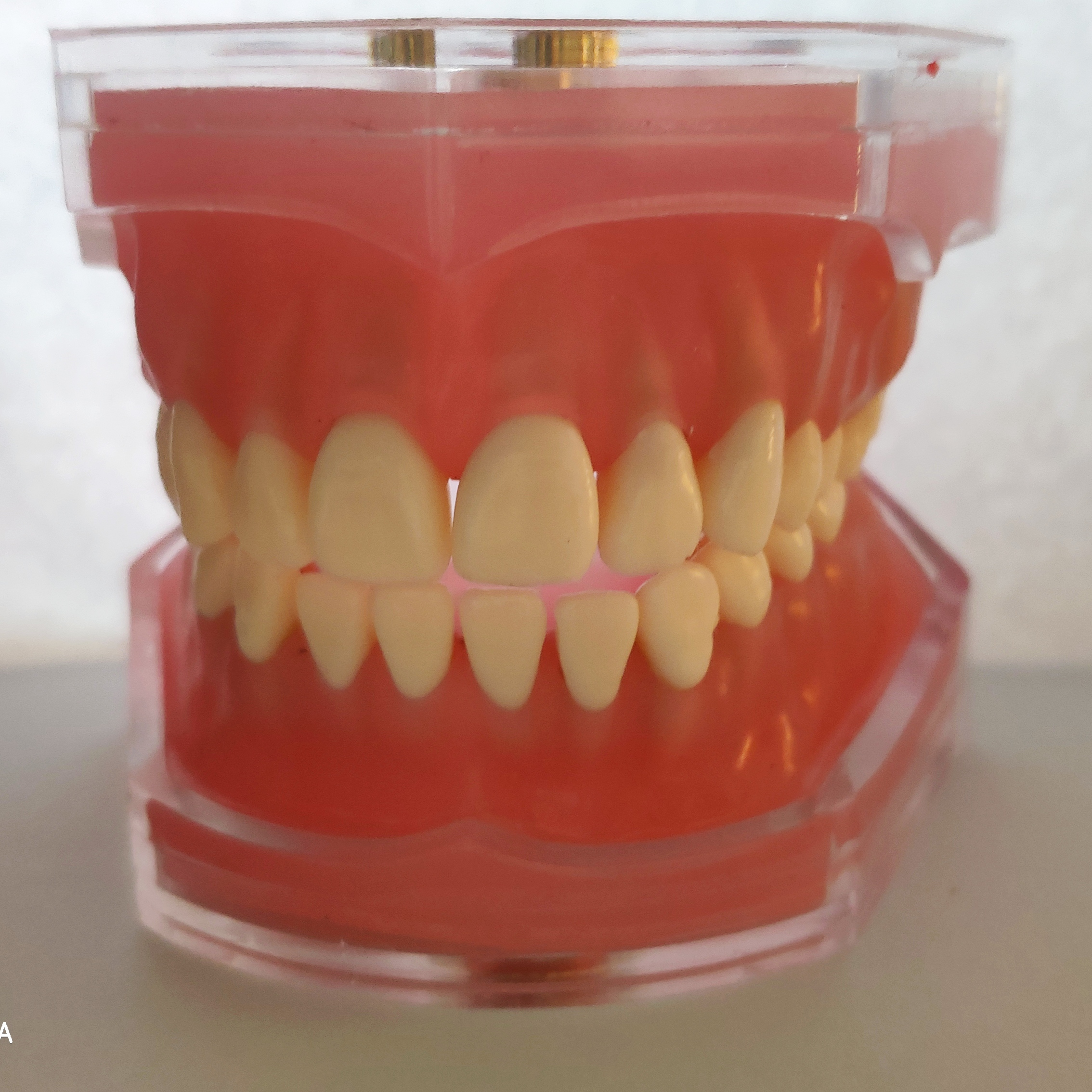Модель для обучения стоматологии/силиконовый материал