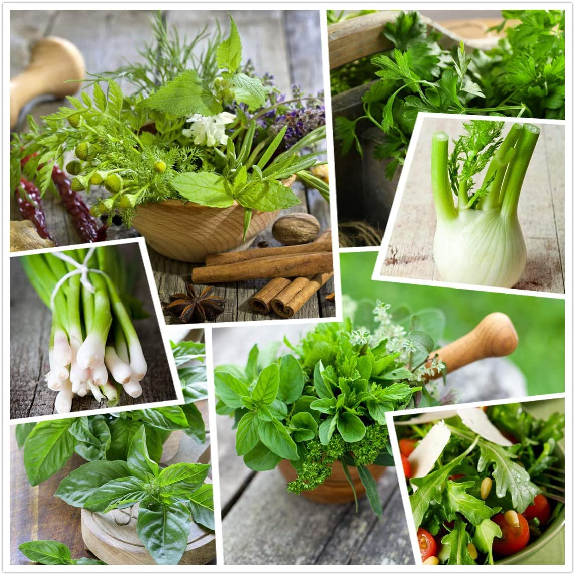 20 Culinary Herb Seed Vault Heirloom Vegetables seeds - Plus Seeds for Planting for Indoor or Outdoor Herbs Garden,Customizable