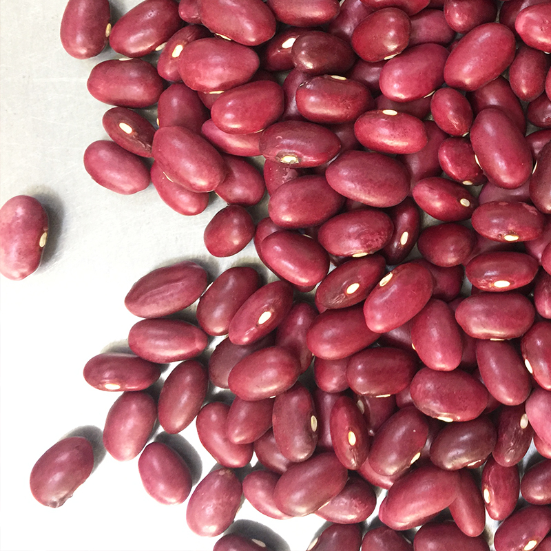 Britain Dark Red Kidney Beans for canned food