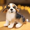 Beagle farbe