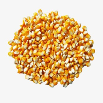 Wholesale bulk 100% Mature Corn nutrient-rich organic corn price