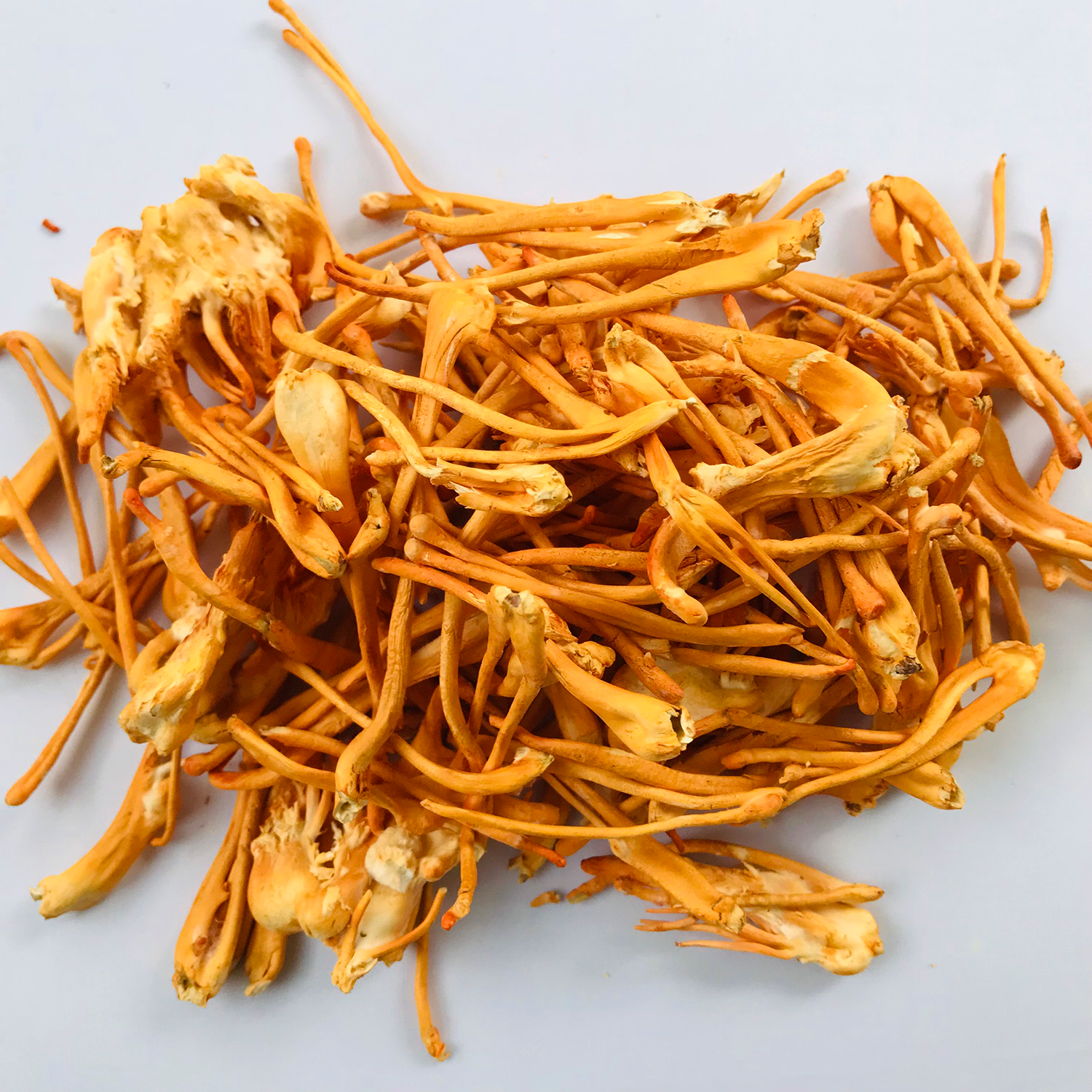 Cordyceps Mushroom Healthy Product 100% Natural Herbal High Quality Product Good For Health Providing Energy OEM V-Store
