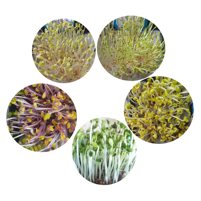 Free shipping of 2020 wholesale microgreen seeds Sample list of 5 varieties seeds