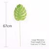 Large Monstera