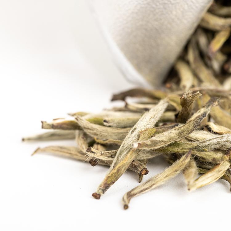 chinese factory made Silver Tip Pekoe white tea for home drink - 4uTea | 4uTea.com