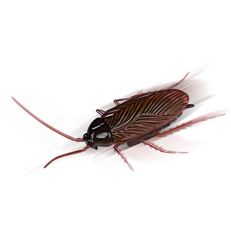 Hot selling  Vibrate Crawl Cockroach Walking Insect Joke Scary Trick Bugs Animal Toys