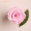 الوردي