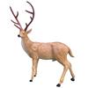 dad deer