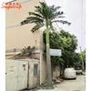 Large coconut tree