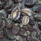 Abalone Cheap Frozen Abalone For Sale With Seafood Frozen Abalone