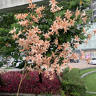 2020 Autumn Colors Oncidium Autumn Colors Wedding Floral Decoration Flowers Wholesale