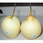 Pear Pear Super Ya Pears/Ya Lie Pear Chinese Newest Crop Pear Sweet Healthy Wholesale Price