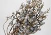 Anshu Tree white fruits