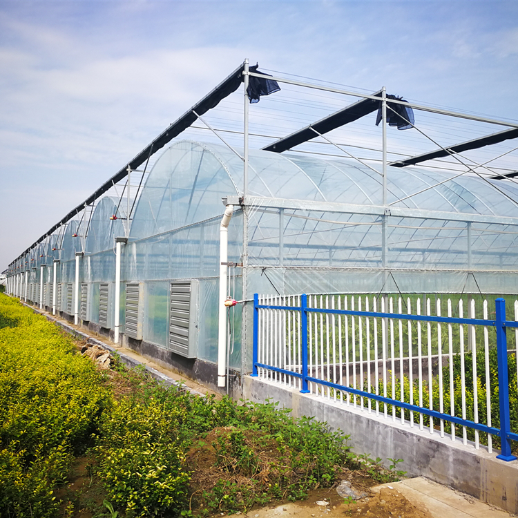 Tomato Greenhouse Manufacturers In Pakistan With Dutch Bucket