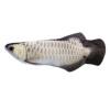 Electric silver dragon fish