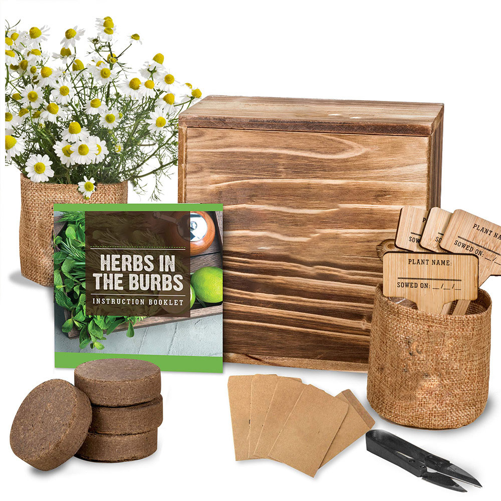 Bonsai Tree Growing Kit Grow 4 Indoor Bonsai Trees Plant A Garden From Seeds Customized Present Gift For Girl And Children Buy Bonsai Tree Growing Kit Grow 4