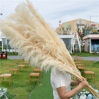 V-3078 Wholesale Pink White Natural Dried Pampas Grass For Wedding