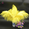 45-50cm yellow