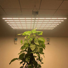 Sunlight Led For Plant LED Grow Light 4FT Full Spectrum Sunlight Replacement High Output Integrated Growing Fixture With Rope Hanger For Indoor Plants