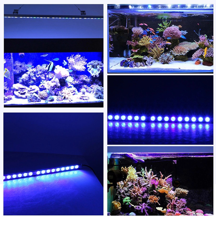 2021 1000K white blue green uv full spectrum 45 inch 36x3w 108w coral reef used led aquarium light