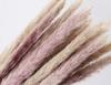 reed of original color