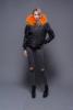 Black shell+orange fur