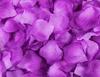 Dark light purple