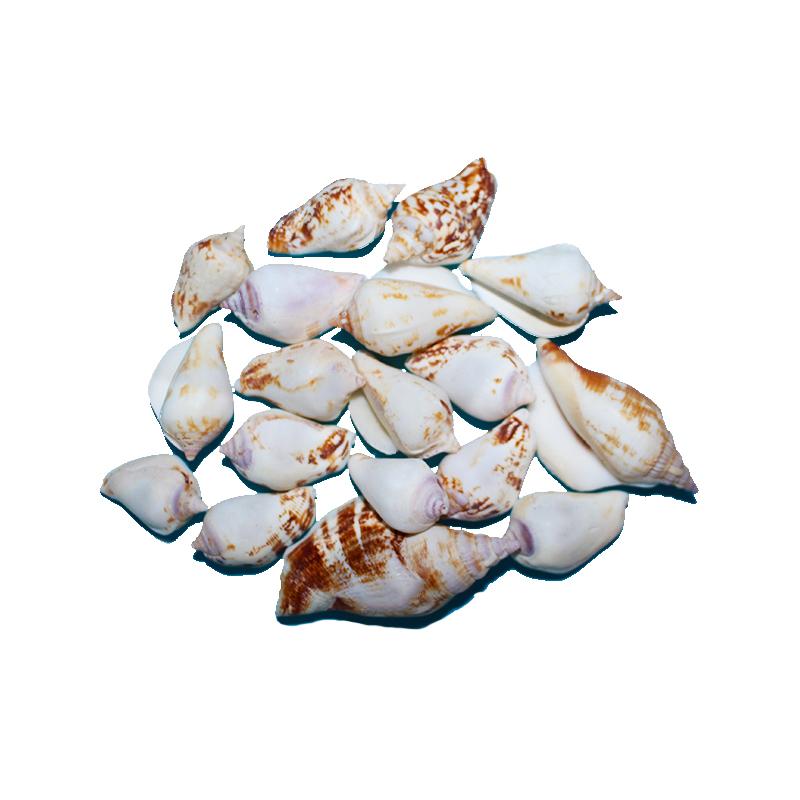 Натуральная ракушка ракушки оптом около 2 см блеск змеи голова Cowrie коллекционный образец улитка